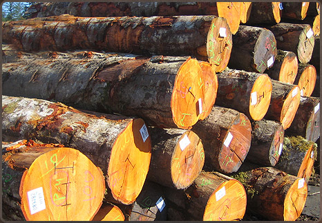 Timber Market, Timber Log Importers and Saw Millers